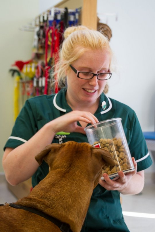 Ever wondered what a Veterinary Nurse does?