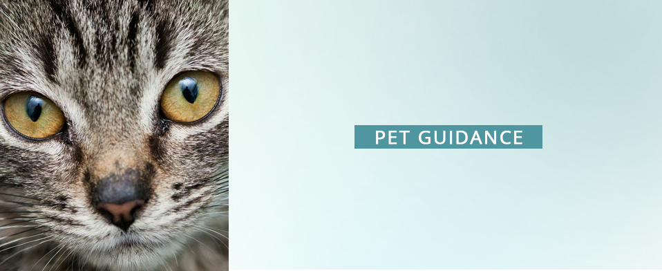 Pet guidance