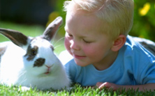 Rabbits Pet guidance