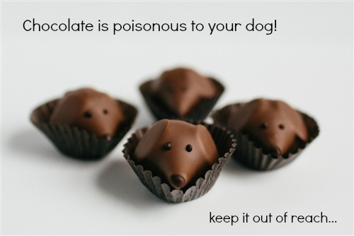 What Chemical In Chocolate Can Be Toxic To Dogs